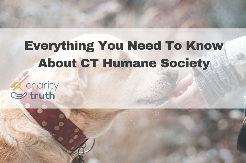 Everything You Need to Know About the CT Humane Society