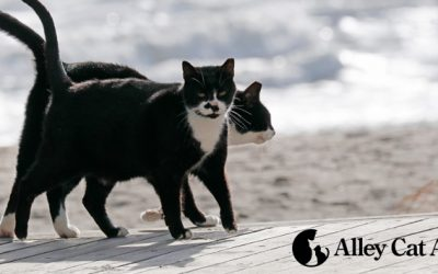 Everything You Need to Know About Alley Cat Allies: Cat Caregivers
