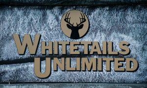 whitetails